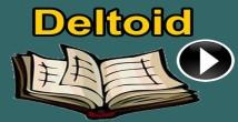 Deltoid ve Özellikleri 10. Sınıf