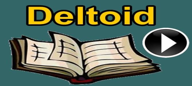 Deltoid konu anlatımı videosu