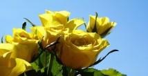 Bembeyaz Bir Gelinlik Ve Rengarenk Çiçekler
