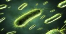 Bakterilerin Özellikleri