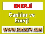 Canlılar ve Enerji