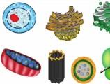 Hücrenin Kısımları