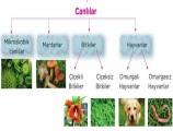 Canlılar Kaç Gruba Ayrılır? Canlılar Dünyası 5. Sınıf