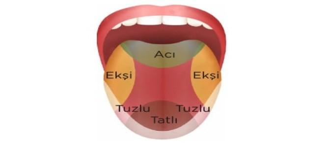 Dil Nedir? Yapısı ve Özellikleri 6. Sınıf