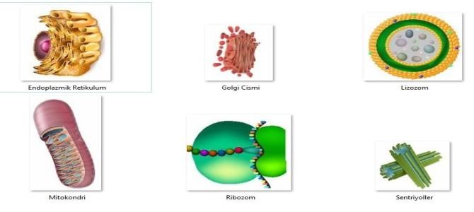 Hücre ve Bölünmeler 7. Sınıf
