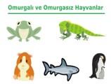Omurgalı ve Omurgasız Hayvanlar Özellikleri 5. Sınıf