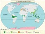 Dünyadaki İklim Tipleri 6. Sınıf