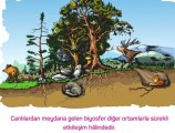 Biyoçeşitlilik 11. Sınıf Coğrafya
