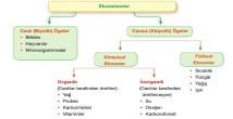 Ekosistemlerin Bozulma Nedenleri ve Sonuçları 11. Sınıf Coğrafya