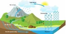 Su Ekosistemleri 11. Sınıf Coğrafya