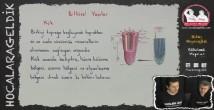 Bitkisel Organlar konu anlatımı video 12. sınıf biyoloji