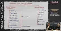 Fotosentez Hızına Etki Eden Faktörler konu anlatımı video 12. sınıf biyoloji