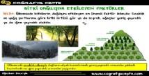 Türkiye'de Bitkiler konu anlatımı video 10. sınıf coğrafya
