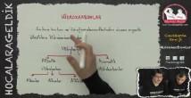 Hidrokarbonlar konu anlatımı video 12. sınıf kimya