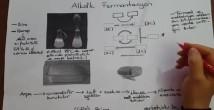 Etil Alkol – Laktik Asit fermantasyonu konu anlatımı video 12. sınıf biyoloji