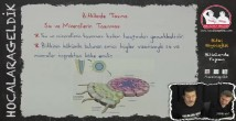Bitkilerde Madde Taşınması konu anlatımı video 12. sınıf biyoloji