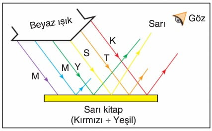 Cisimlerin Renkli Görünmesi 10. Sınıf konu anlatımı