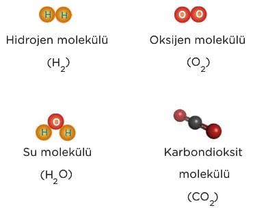 Molekül Nedir 7. Sınıf Fen Bilimleri Konu Anlatımı